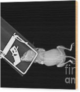 X-ray Of A Mouse Caught In A Trap Wood Print