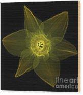 X-ray Of Daffodil Flower Wood Print