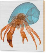 X-ray Of Hermit Crab Wood Print