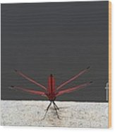 X Wing Dragonfly Wood Print