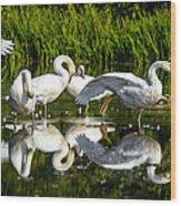 Y-m-c-a Swans Wood Print