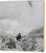 Yak In The Himalaya Wood Print