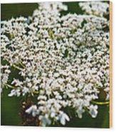 Yarrow Plant Flower Head  Wood Print