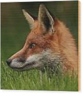 Yearling Fox Wood Print by Jacqui Collett
