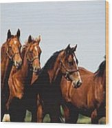 Yearling Thoroughbred Wood Print