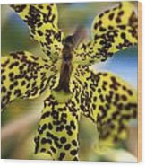 Yellow And Black Spotted Orchid Wood Print