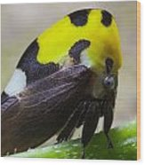 Yellow And Black Treehopper Wood Print