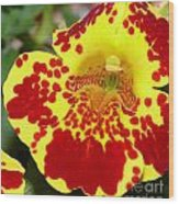 Yellow And Red Bright Flower Wood Print