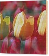 Yellow And Red Tulip Blooms Wood Print