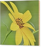 Yellow Artichoke Wood Print