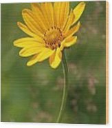 Yellow Aster Wood Print
