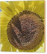 Yellow Autumn Sunflower Wood Print