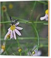 Yellow Banded Black Winged Fly 1 Wood Print