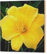 Yellow Beauty  Wood Print