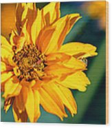Yellow Beauty Wood Print by Rourke