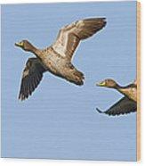 Yellow-billed Duck Anas Undulata Pair Wood Print