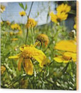 Yellow Blooming Wildflowers Wood Print