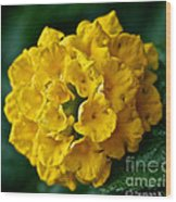 Yellow Blooms Wood Print