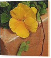 Yellow Blossom On Planter Wood Print