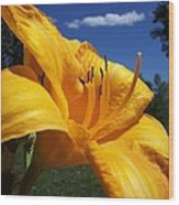 Yellow Blue Sky Lily Wood Print