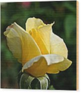 Yellow Bud Wood Print