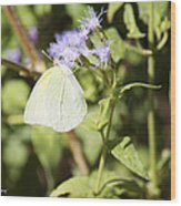 Yellow Butterfly Feeding On Violet Flower Wood Print