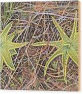 Yellow Butterwort In Habitat Wood Print by Scott Bennett