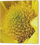 Yellow Chrysanthemum Wood Print