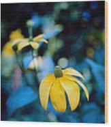 Yellow Cone Flower On Blue Background Wood Print by Marcio Faustino