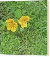 Yellow Couplet Wood Print