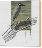Yellow-crowned Night-heron Wood Print