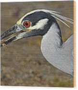 Yellow Crowned Night Heron With Catch Wood Print