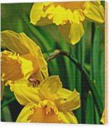 Yellow Daffodils And Honeybee Wood Print