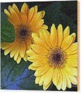 Yellow Dahlias Wood Print