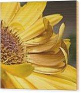 Yellow Daisey Closeup Wood Print