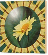 Yellow Daisy Energy Wood Print