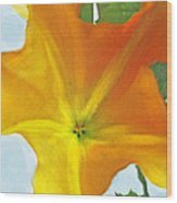Yellow Datura Wood Print