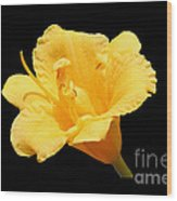 Yellow Day Lily On Black Wood Print