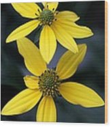 Yellow Duet Wood Print