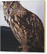 Yellow-eyed Owl Side Wood Print