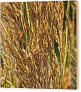 Yellow Feather Reed Grass Wood Print