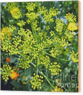 Yellow Firework Or Dill In Its Glory Wood Print