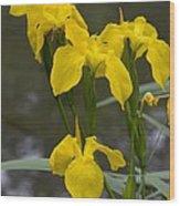 Yellow Flag Iris (iris Pseudacorus) Wood Print