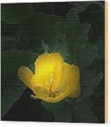 Yellow Flower Against Green Wood Print