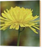 Yellow Flower And Bokeh Wood Print