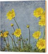 Yellow Flower Blossoms Wood Print