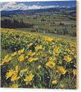 Yellow Flowers Blooming, Hood River Wood Print