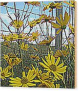 Yellow Flowers By The Roadside Wood Print