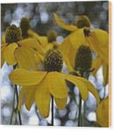 Yellow Flowers Wood Print by Naomi Berhane