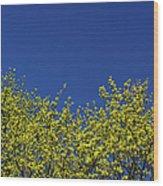 Yellow Flowers Tree Wood Print